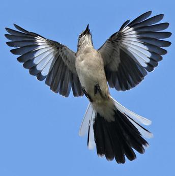 درجات کاربری MockingBirds اختصاصی پی سی وب